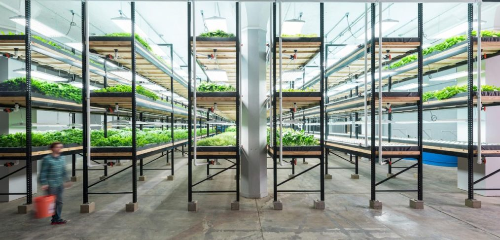 Urban Farming Is the Future of Agriculture